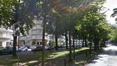 Uccle : le panneau de la Stib sur l'élagage des arbres de l'avenue Churchill était une erreur
