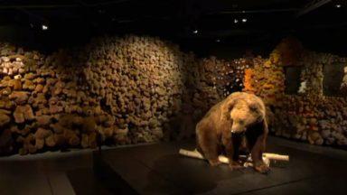"""""""Ours et Nounours"""", une expo au Muséum pour mieux comprendre les ours… avec son ours en peluche"""