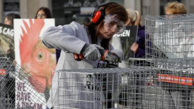 Gaia découpe 50 grillages à la scie électrique pour sensibiliser à l'élevage en cage