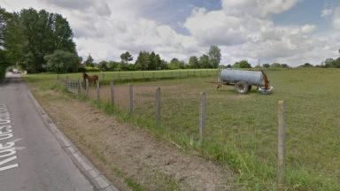 Deux nouvelles réserves naturelles à Anderlecht