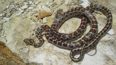 Un serpent retrouvé dans un magasin bio de Saint-Gilles