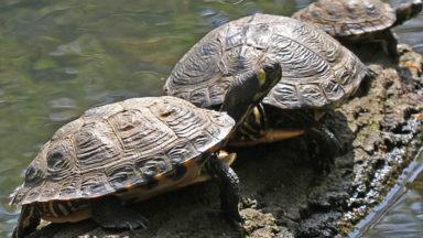 La Région bruxelloise veut limiter à 422 le nombre d'espèces de reptiles pouvant être détenues