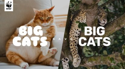 Campagne WWF Chats Jaguar - Big Cats