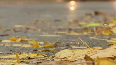 Feuilles mortes, route mouillée et manque de lumière causent de nombreux accidents en automne