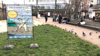 Une dame donne à manger aux pigeons, mais attire les rats à la Cage aux Ours