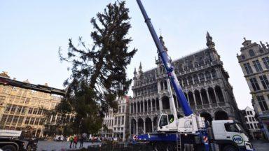 Le sapin de la Grand-Place de Bruxelles connaîtra une seconde vie à la Foire du Jardin naturel