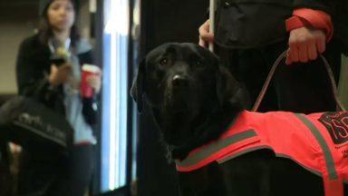 La Région lance une campagne de promotion en faveur de l'accès des chiens d'assistances aux lieux publics