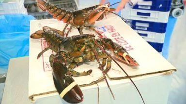 Entre 12.000 et 13.000 kilos de homards livrés depuis Bruxelles durant les fêtes