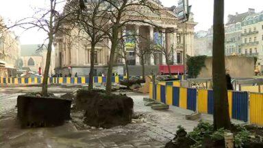 Piétonnier : nouvelle phase de travaux, les arbres sont déplacés vers l'avenue de l'Héliport