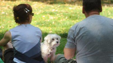 La Région bruxelloise lance une convention pour la garde d'animaux de personnes hospitalisées