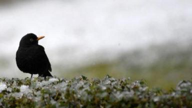 Les oiseaux des jardins déchantent
