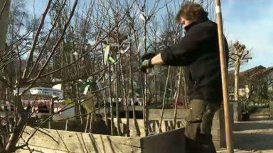 Jardinage : les conseils pratiques pour s'occuper de son jardin suite au retour du soleil