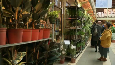 Les plantes vertes ont la cote, c'est un succès pour la grande vente organisée aux Halles Saint Géry
