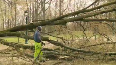 Jamais autant d'arbres arrachés ou déracinés la semaine dernière depuis 15 ans