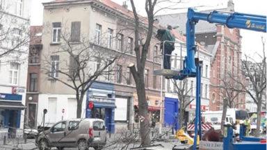 Des arbres condamnés place du jeu de Balle pour raison de sécurité