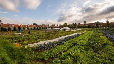 Watermael-Boitsfort : mobilisation pour relancer la ferme du Chant des Cailles