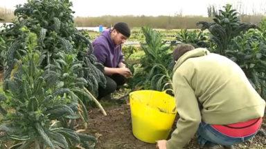 Des jeunes demandeurs d'emploi suivent une formation en maraîchage biologique