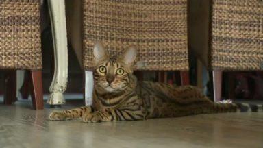 Stériliser son chat est obligatoire en Région bruxelloise