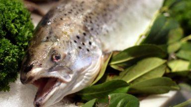 Cheval, espérance de vie, AirBNB et Kompany : à la pêche aux poissons d'avril