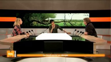 """Biodiversité : """"En Belgique, on est à plus d'une espèce sur huit menacée d'extinction"""""""