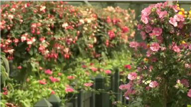 À la découverte des serres de Bruxelles et de ses 150 variétés de plantes