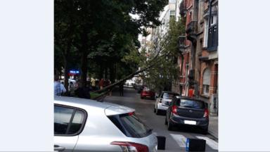 Schaerbeek: un arbre est tombé sur une maison avenue Plasky direction Meiser