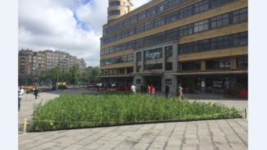 Ixelles : un tapis d'orties installé sur la place Sainte-Croix