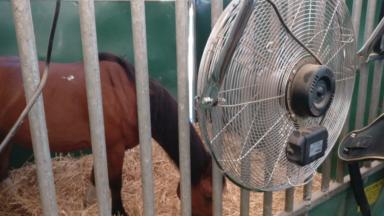 Les chevaux ne feront pas de visites en calèche à Bruxelles sous ces fortes chaleurs