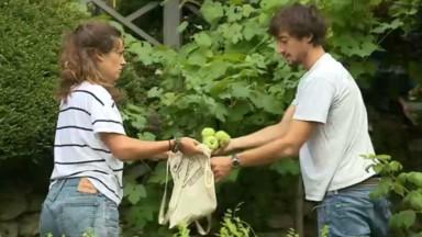 FruitCollect, l'association bruxelloise qui récolte le trop plein de fruits pour les redistribuer