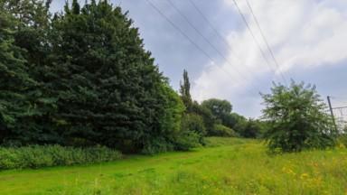 Schaerbeek : des arbres abattus ou sécurisés dans le parc Walckiers