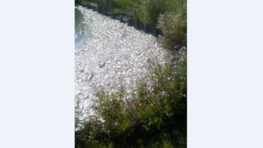 Des tonnes de poissons retrouvés morts dans un étang à Dilbeek