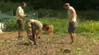Les projets d'agriculture durable toujours plus populaires mais encore trop marginaux à Bruxelles