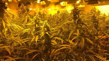 La police démantèle une organisation criminelle et découvre plus de 7800 plants de cannabis