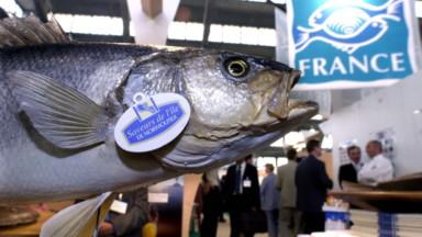 """Le salon Seafood 2020 annulé : le """"salon du poisson"""" ne reviendra pas à Bruxelles"""