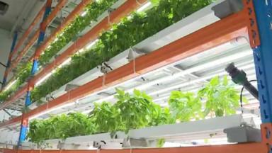 Aux Abattoirs, la ferme Urban Harvest cultive verticalement des légumes et des herbes aromatiques