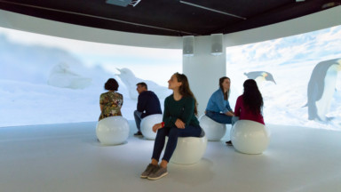 Une exposition immersive consacrée à l'Antarctique à l'Institut royal des sciences naturelles de Bruxelles