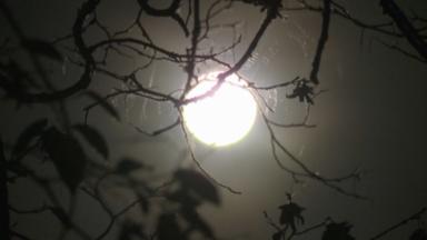 Nuit de l'obscurité : la pollution lumineuse a un impact sur notre environnement