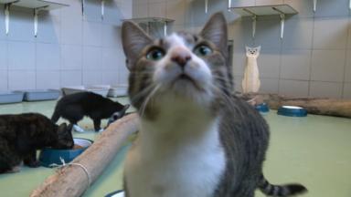 Stérilisation des chats : la Croix bleue s'occupe des chats errants