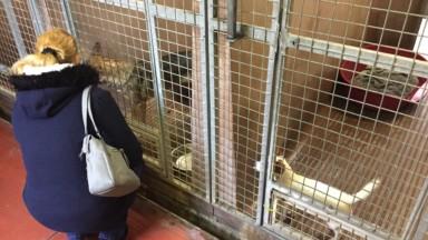 Un Noël des animaux organisé au refuge de Bruxelles pour adopter de manière responsable