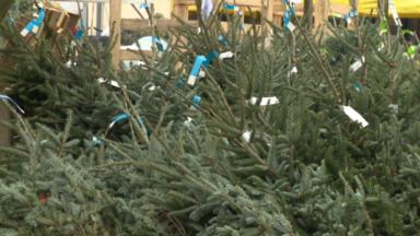 Les sapins de Noël quittent les demeures : voici où et quand déposer votre sapin en Région bruxelloise