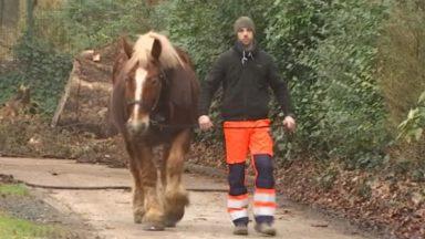 Schaerbeek : deux nouvelles recrues dans l'équipe des chevaux de la commune
