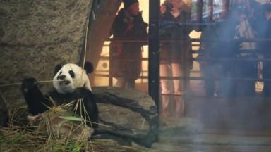 Ixelles : les sorties scolaires dans des parcs animaliers désormais évitées dans les écoles communales