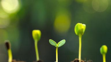 20.000 kits de graines pour cultiver son potager