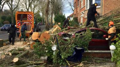 Tempête Ciara : les élagueurs sont à pied d'oeuvre pour réparer les dégâts