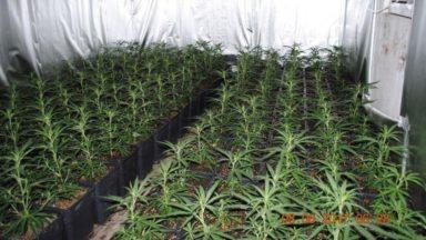 Plusieurs plantations de cannabis découvertes au départ d'une enquête à Molenbeek