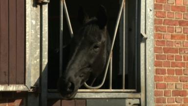 Confinement : la santé des chevaux délaissés pourrait en pâtir