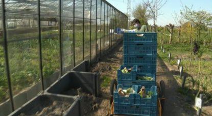 Légumes Verts d'Iris - Pépinière - Capture BX1