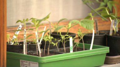 La Ville de Bruxelles distribue des graines aux habitants pour réaliser leurs propres semis