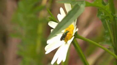 Journée de la biodiversité : 39 ONG lancent un mouvement pour pousser à un changement de comportement