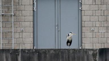 Avec le confinement, les espèces sauvages ont pris leurs aises
